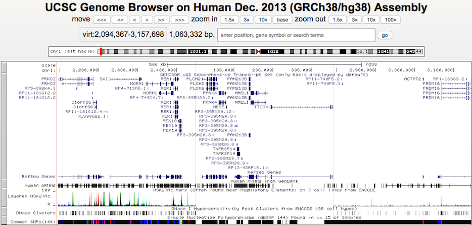 Multi-Region haplotype view